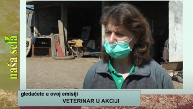 Photo of Naša sela: Kakav je posao veterinara?