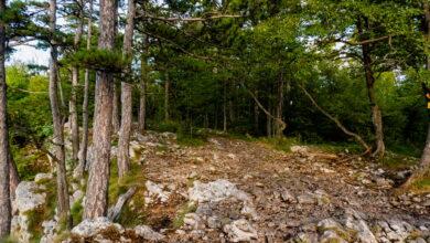 Photo of Iz zbirke lovačkih priča: Div u borovima