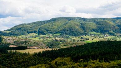 Photo of Naseljavanje jelena: Bogatstvo na teritoriji Nove Varoši