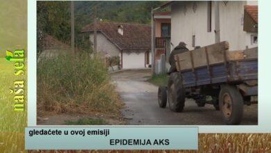 Photo of Naša sela: Suzbijanje epidemije AKS u okolini Negotina