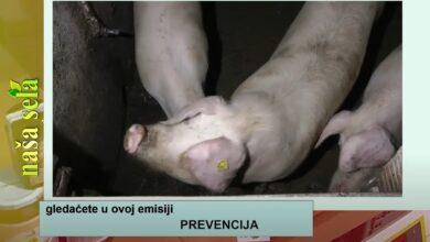 Photo of Naša sela: Mere prevencije od AKS