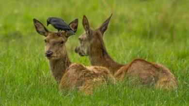 Photo of POČINJE lovna sezona na srneću divljač